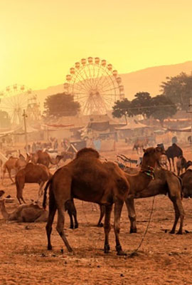 Pushkar Destination